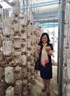Nấm Vân chi - Loài nấm có giá trị dược liệu cao