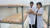 """Khám phá công nghệ nuôi trồng loài nấm """"nửa cây nửa con"""" của các nhà khoa học Việt"""