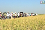 Hội nghị đầu bờ đánh giá kết quả sản xuất thử giống lúa lai TH6-6 và MV2 tại Thái Bình