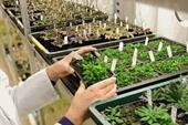 Thực trạng ngành giống cây trồng Việt Nam và định hướng phát triển