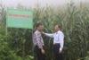 Hội nghị đánh giá hiệu quả mô hình trình diễn bốn giống ngô địa phương sau phục tráng tại Lào Cai