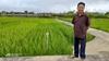 Những người tiên phong Nhà khoa học trọn đời nghiên cứu lúa lai