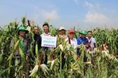 Ngô trái cây – Bước đột phá trong chọn tạo giống ngô thế hệ mới tại Học viện Nông nghiệp Việt Nam
