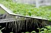 Ứng dụng công nghệ IOT tại Viện Sinh học Nông nghiệp - Học viện Nông nghiệp Việt Nam