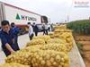 Hiệu quả từ mô hình sản xuất khoai tây gắn với liên kết tiêu thụ