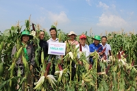 Fruit corn – A breakthrough in selecting the new generation of corn species at Vietnam National University of Agriculture